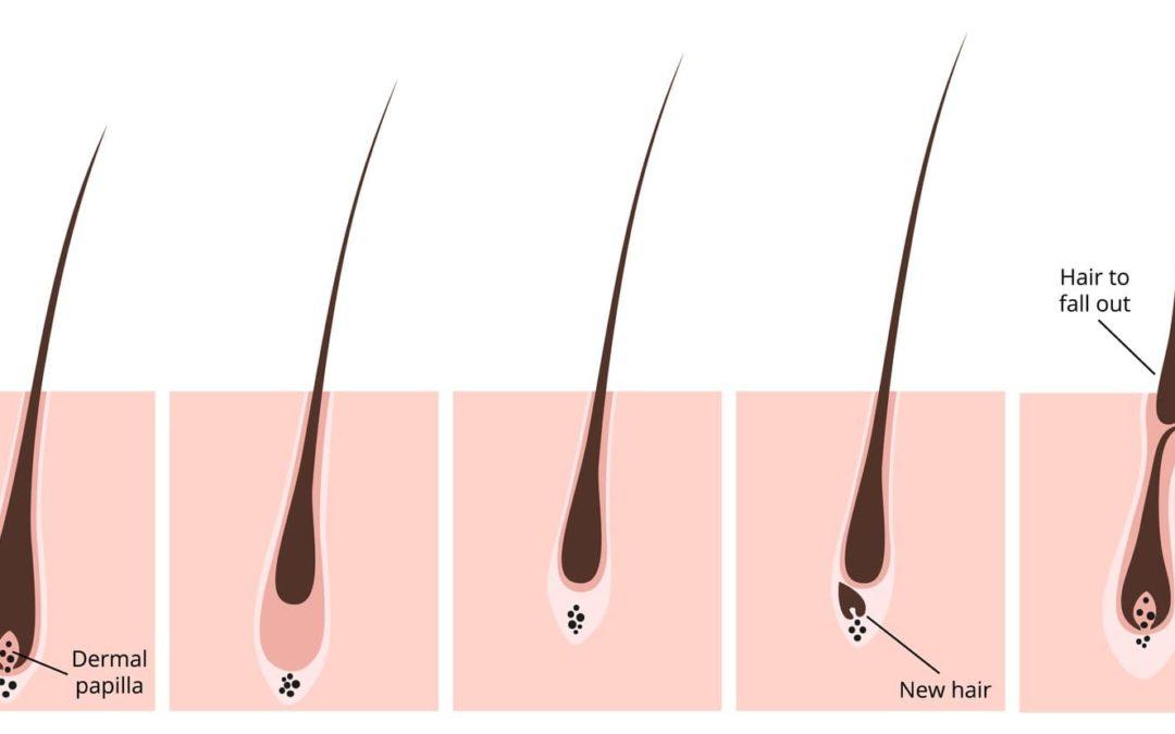 Wie und warum wachsen unsere Haare?