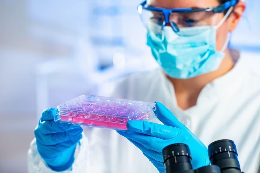 Zelltherapie Forschung