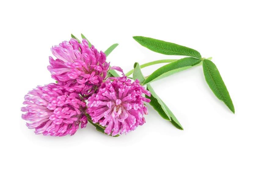 Pflanze auf weißem Hintergrund