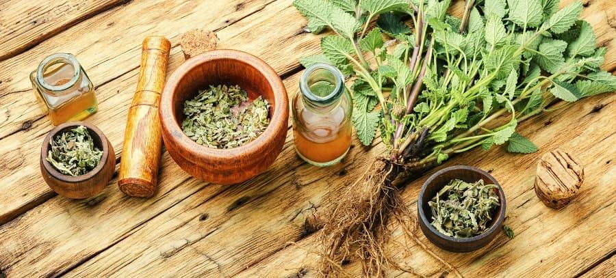 Ein Mörser und diverse natürliche Heilpflanzen liegen auf einem Holztisch